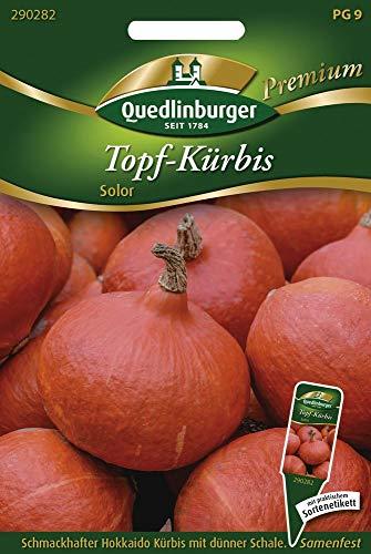 Quedlinburger 290282 Topf-Kürbis Solor (Hokkaidokürbissamen)