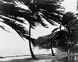 USA Florida Hurricane Poster Drucken (60,96 x 91,44 cm)