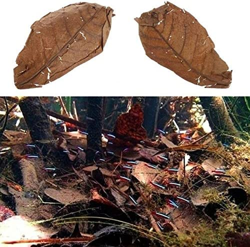 Natural Shipping included Catappa Leaves Almond Leaf Aquar Treatment Price reduction Cleaning Fish