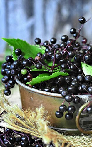 "Notebook: elder elderberries berries juice fruits 5"" x 8"" 150 Ruled Pages"