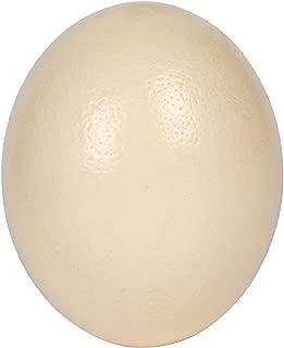 Premium Ostrich Eggshell (Grade A, Large Size)