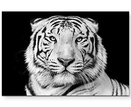 Paul Sinus Art Leinwandbilder | Bilder Leinwand 120x80cm Portrait eines weißen Bengalischen Tiger schwarzweiß