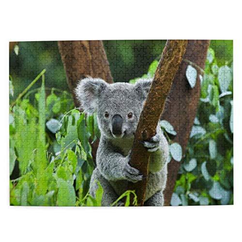 Rompecabezas Puzzle 500 Piezas Piel Eucalyptus Amenazada Rama Oso Árbol Koala Natural Australia Animal Arbóreo Inteligencia Jigsaw Puzzles para Adultos Niños Juegos