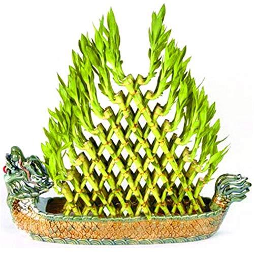 Tomasa Samenhaus- Raritäten 100 Stück Mini Bambus Exotisch Winterharter Bambus Samen mehrjährig Bonsai Pflanzensamen Immergrün Pflanzensamen für Balkon/Garten