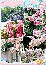 7 : Sale! 200Pcs 10 Kinds Bonsai Polyantha Rose Seeds Organic Blooming Flower Seeds Garden Plant