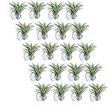 Tashido 20 soportes para plantas de aire, macetas para plantas hasta un perchero con ventosa para colgar (plantas no incluidas).
