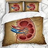 Soefipok Fundas nórdicas Conjuntos Enfermedad de trasplante Riñón Humano en gráfico de cáncer Diagrama renal Diálisis Diseño Lecho de Microfibra urinaria con 2 Fundas de Almohada