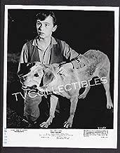 8x10 Press Photo~ Disney's Old Yeller ~1957 ~Tommy Kirk & Dog ~CS