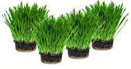 Cat Grass x 4 Pack (Grow your own kits) By Cat FurNature
