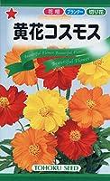 株式会社トーホク 黄花コスモス 09703
