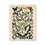 Sungup Antike Schmetterling Vintage Poster Drucke Insekt