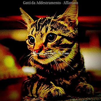 Gatti da Addestramento - Affamato
