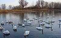 大人のための新しいパズル1000鳥白鳥動物のクリスマスプレゼント50x70cm