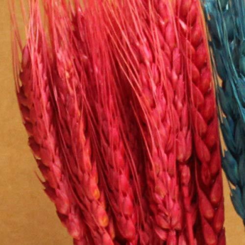 B-UK Ramos de secas Natural, Espigas de Trigo, 100 Palos,-Rojo, para decoración del hogar de Boda Decoracion otoño