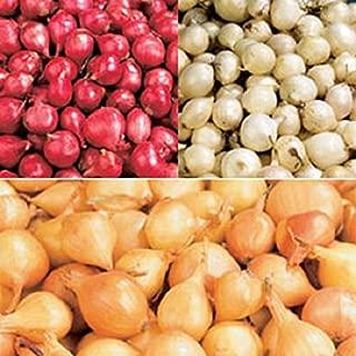 Best giant onion bulbs Reviews