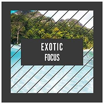 2019 Exotic Focus