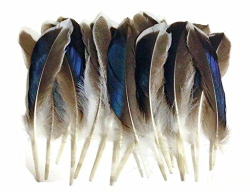ERGEOB Natürliche Haarstockente Federn geflügel grün Stockente Ente Federhaar 8-13 cm (3-5 Zoll) Länge