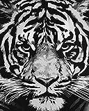 QHZSFF Pintar por Numeros Adultos Niños, DIY Pintura al Óleo por Números Dibujos para Pintar con Números Decoración del Hogar Cabeza de Tigre -40 x 50 cm-Sin Marco