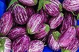 Fairy Tale F1 Eggplant Seeds - Non-GMO - 10 Seeds