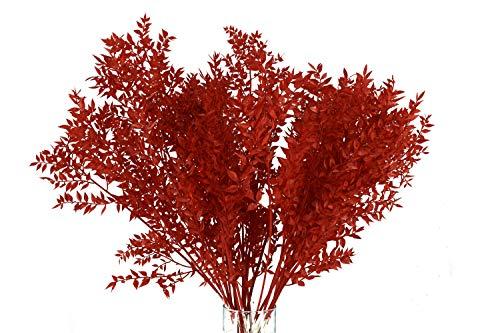 Trockenblumenstrauß Mäusedorn (Pres Ruscus) | Getrocknete Blumen in Rot | Deko Strauß aus Mäusedorn | 75 cm