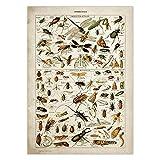 JYWDZSH Leinwanddruck Buttferflies Vintage Poster Bienen