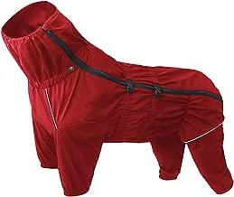 Amazon.es: impermeable perro