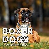 Boxer Dogs Calendar 2021: 16-Month Calendar, Cute Gift Idea For Boxer Dog Lovers Men & Women