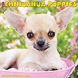 Just Chihuahua Puppies 2022 Wall Calendar