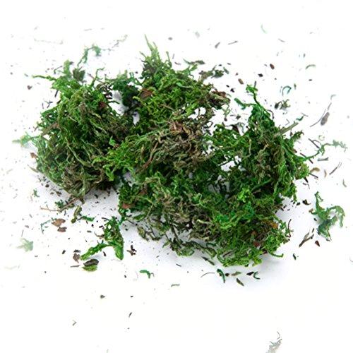 WINOMO 3 Confezioni di Muschio Artificiale Simulazione di licheni Piante Verdi finte per la Decorazione del Patio Giardino Domestico 60 g/Pacco
