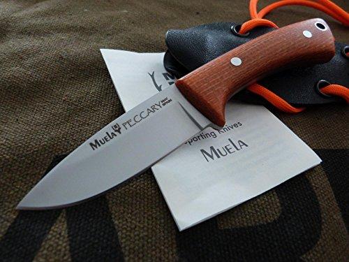 Muela Cuchillo Peccary-8.O
