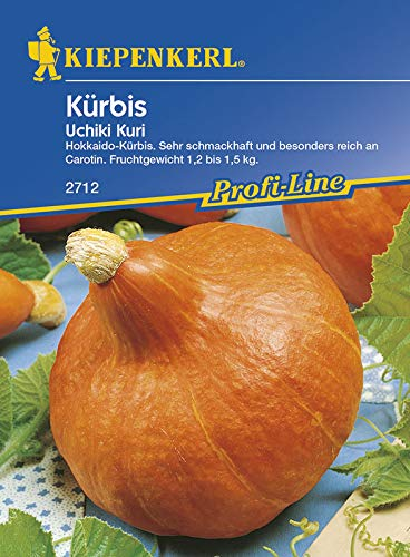 Kürbissamen - Kürbis Uchiki Kuri, Hokkaidokürbis von Kiepenkerl