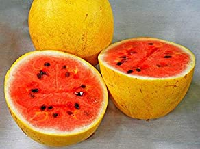 Fruit Seeds Golden Midget Watermelon, 10 Seeds, Sweet Pink Flesh, Yellow Rind, Ripens Early, Natural, Showy Fruit