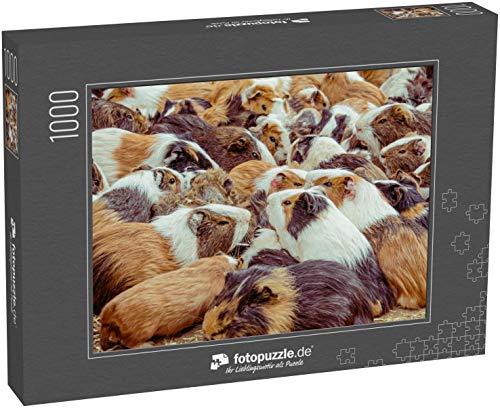 fotopuzzle.de Puzzle 1000 Teile Cavia porcellus Meerschweinchen in großer Gruppe, Zoo auf dem Boden sitzen