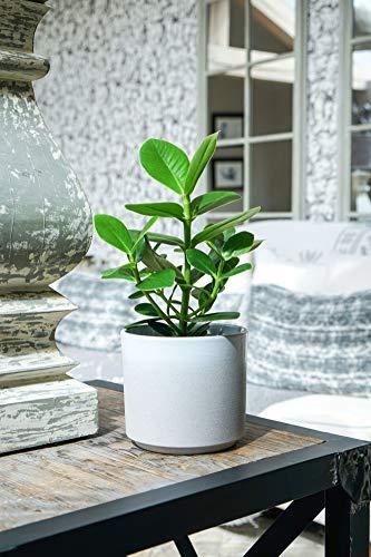 Ivyline Coastal Leon Stone Dove Grey Indoor Plant Pot Planter Flower Pot 16cm or 12cm (12)