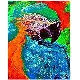 Xynfl Carteles de Arte de Pared Pintura al óleo de Animales sobre Lienzo Cuadros de Pared Cuadros de Loros de Acuarela Abstracta para decoración de Sala de Estar -60x80cmx1 Sin Marco