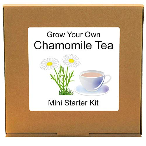 Grow Your Own Chamomile Herbal Tea Making Plant Growing Kit – Unusual, Unique and Quirky Complete Beginner Friendly Indoor Gardening Gift for Men, Women or Children