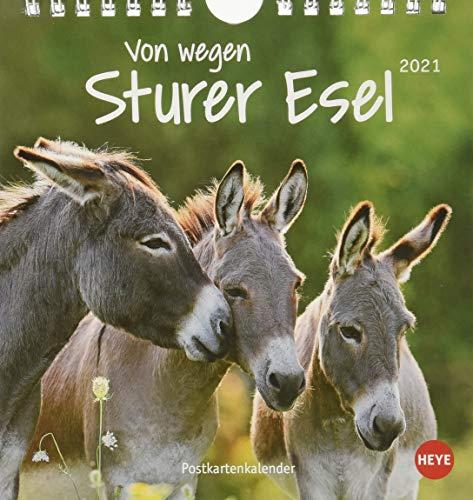 Esel - Von wegen sturer Esel Postkartenkalender 2021 - Kalender mit perforierten Postkarten - zum Aufstellen und Aufhängen - mit Monatskalendarium - Format 16 x 17 cm