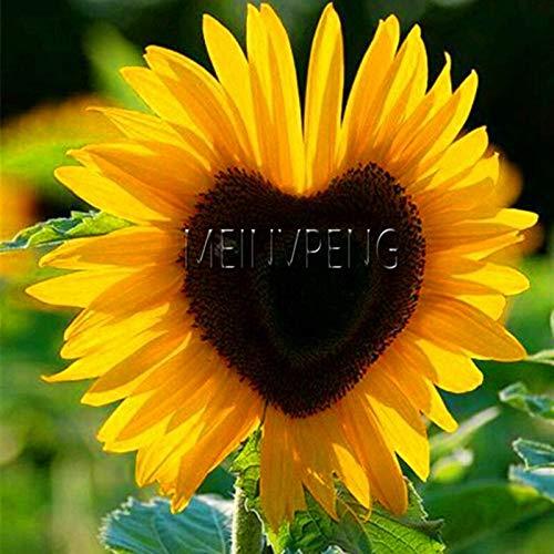 Kalash New 40Pcs Sunflower Blumensamen für Gartenarbeit Gelb