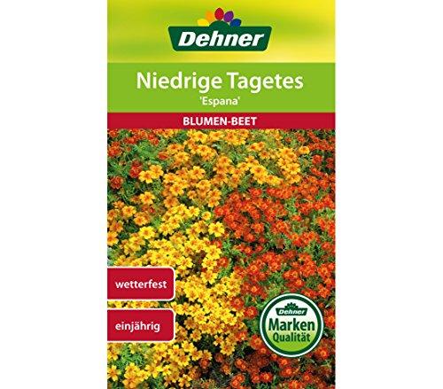 Dehner Blumen-Saatgut, Niedrige Tagetes
