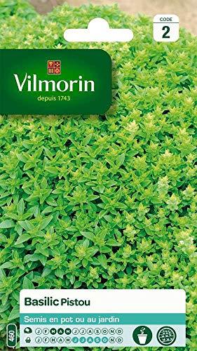 Vilmorin : Basilic Pistou
