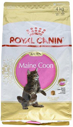 Royal Canin Comida para gatos Kitten Maine Coon 4 Kg ✅