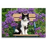 CALVENDO Premium Textil-Leinwand 120 x 80 cm Quer-Format Katze sitzt auf einem Gartenstuhl vor blauen Blüten, Leinwanddruck von Katho Menden