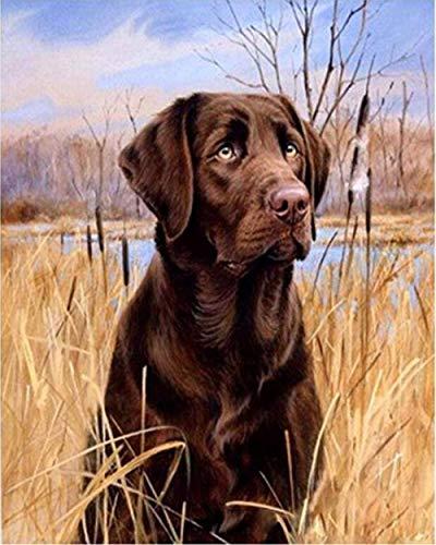 Puzzle 1000 Piezas, Rompecabezas Adultos, Rompecabezas para Niños, Juguetes Educativos,Labrador Perro Animal