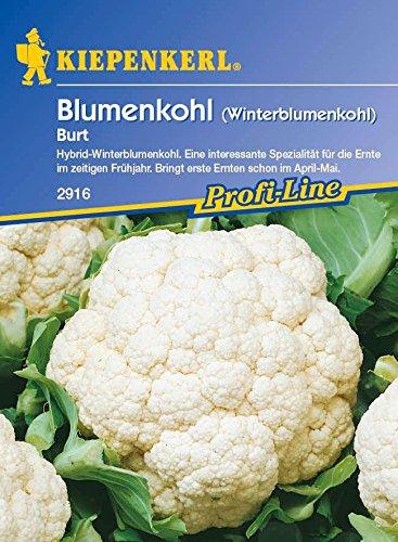 Kohlsamen - WinterBlumenkohl Burt F1 von Kiepenkerl