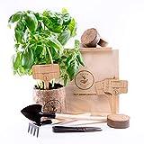 KRÄUTERGARTEN ANZUCHTSET 4 Sorten Pflanzen Samen- garten Starter-Set, öko Saatgut mit Holzkiste mit deckel, mini gewächshaus, kinderküche zubehör, Kinder Anzuchtset von PUT DOWN ROOTS