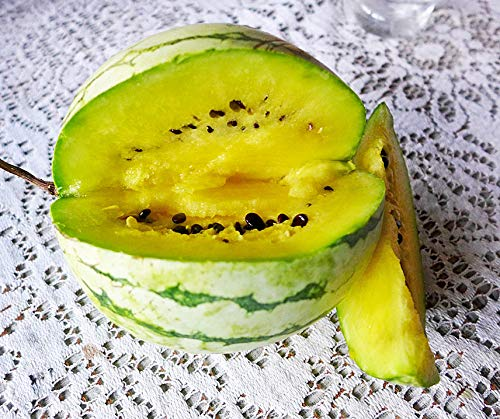 Bobby-Seeds Melonensamen Early Moonbeam Wassermelone Portion