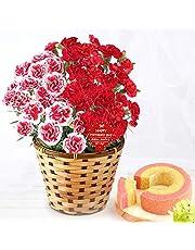 母の日 の プレゼント カーネーション5号鉢 おいもやケーキ洋菓子 花とスイーツ 花鉢 生花 母の日ギフト (2色植え・赤&プラムタルト風)