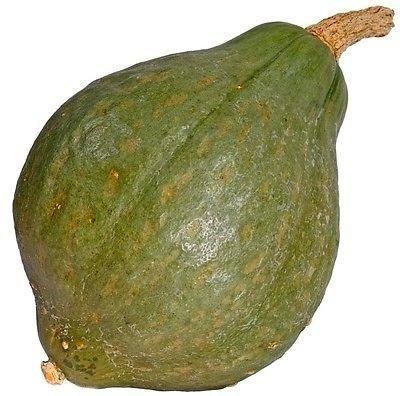 Hubbard véritable verte Squash améliorée, 25 graines
