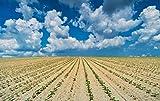 MGE Puzzle 1000 Unidades Campo del arroz bajo el Cielo Azul y Nubes Blancas Acepta Personalizada