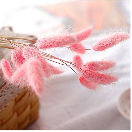 Coorun Samtgras Hasenschwanz-Gras Schwingel Gras Bunny-Tails 10 20 50 Samen Bunte Grün Bodendecker Grassamen für zu Hause Garten Bepflanzung (50, Rosa)